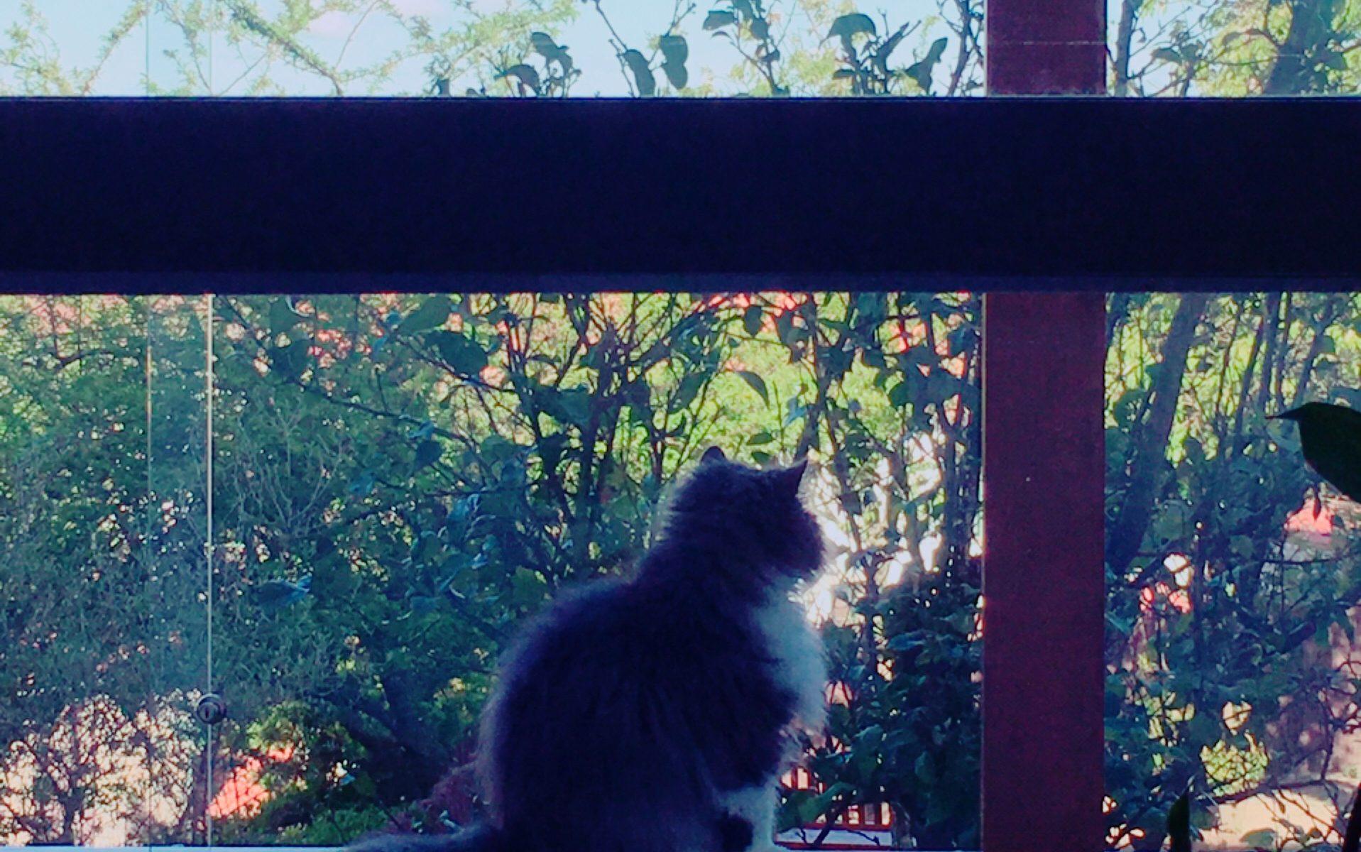 relato gato